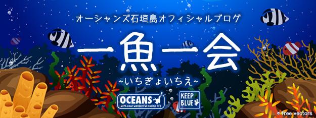 オーシャンズ石垣島オフィシャルブログ「一魚一会」